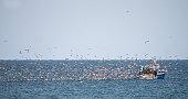 Veel meeuwen bij een vissersboot vlak voor de Franse kust aan de Loire Atlantique