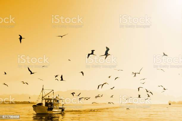 Fishing boat on the sea early mornig picture id671799458?b=1&k=6&m=671799458&s=612x612&h=ht9uzauw6je pp7wnbifoagmtceycer67omqmpxkhgs=
