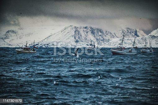 932662672istockphoto Fishing boats out for skrei cod in the arctic sea 1147301570