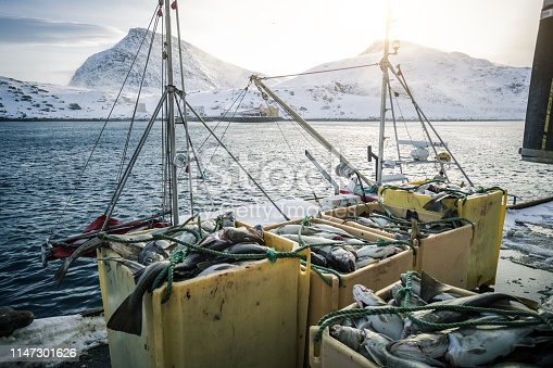 932662672istockphoto Fishing boats out for skrei cod in the arctic sea 1147301626