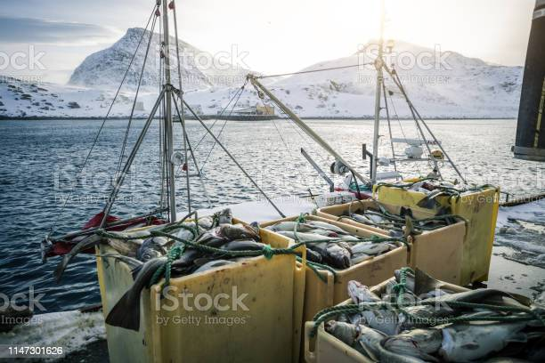 Fishing boats out for skrei cod in the arctic sea picture id1147301626?b=1&k=6&m=1147301626&s=612x612&h=ajx7gopb r 44tgb2rgiy qcsg35dtgkbtvdffbbcmu=
