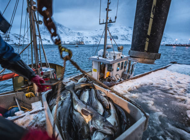 fishing boats out for skrei cod in the arctic sea - fishing boat imagens e fotografias de stock