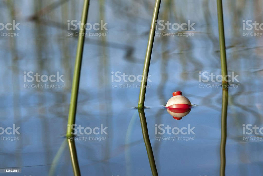 Fishing bobber with green reeds stock photo