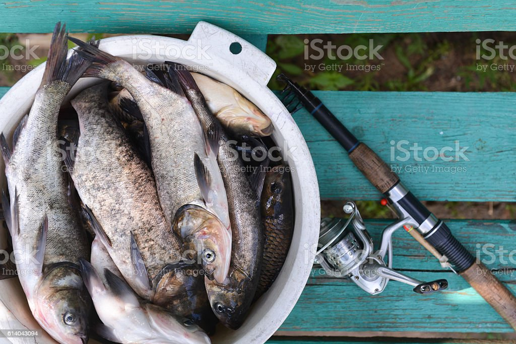 fishing, catch on the wooden background. a fish stock photo