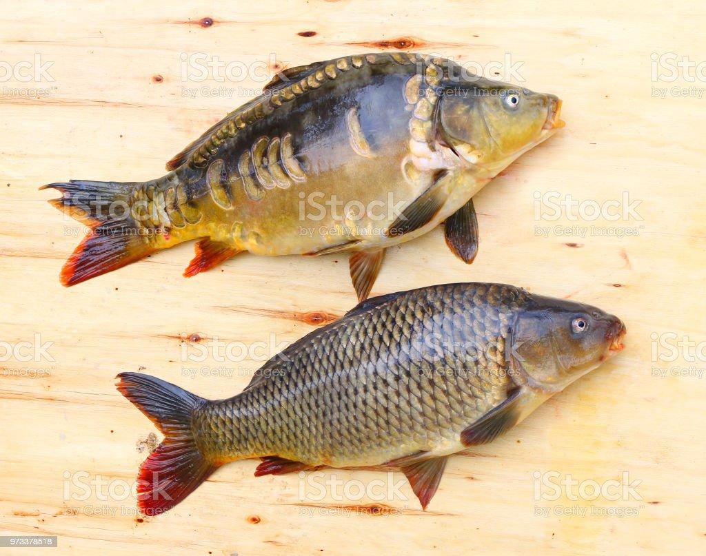Weihnachtsessen Karpfen.Fischen Fangen Der Karpfen Cyprinus Carpio In Polen Und Tschechien