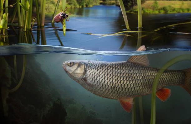 Angeln. Nahaufnahme Bild von einem Angelhaken unter Wasser – Foto