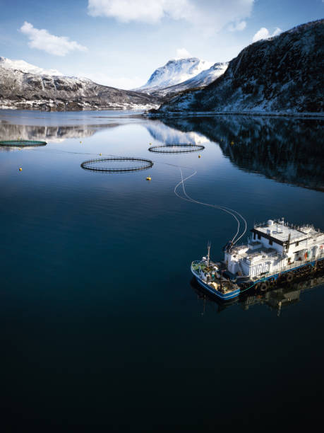 fishing farm in northern norway in a fjord in hilleshamn, tromso province - aquaculture stock pictures, royalty-free photos & images