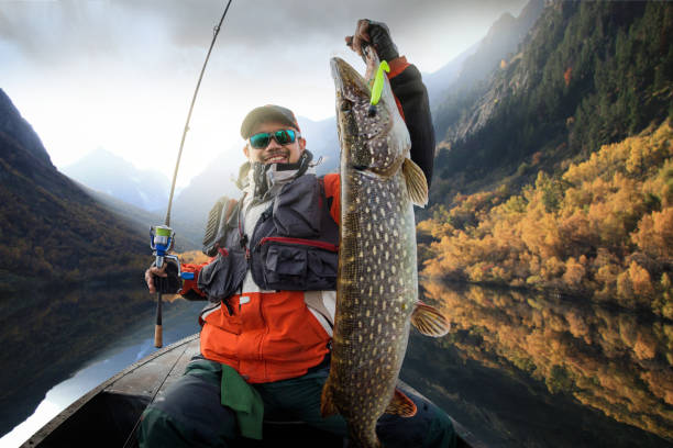 Fishing. Fisherman and trophy Pike. Fishing backgrounds perch fish stock pictures, royalty-free photos & images