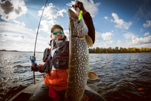 Fishing. Fisherman and trophy Pike. Fishing backgrounds. Trophy. pike fish stock pictures, royalty-free photos & images