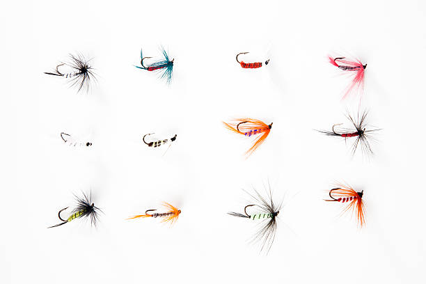 Fishing flies Many fishing flies isolated on white background fishing bait stock pictures, royalty-free photos & images