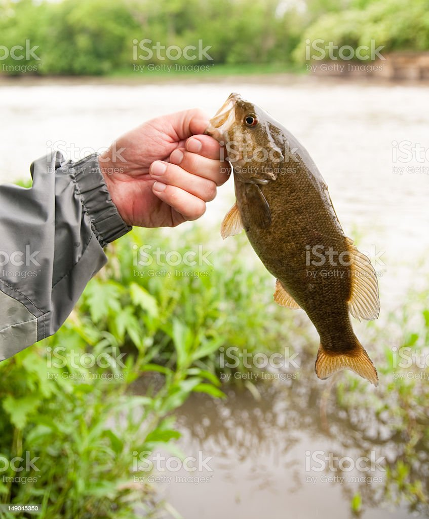 Fishing For Smallmouth Bass stock photo