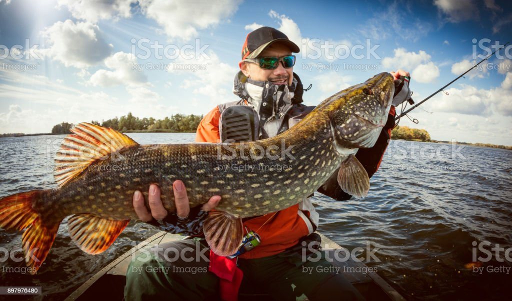 Fishing. Happy angler with pike fishing trophy stock photo