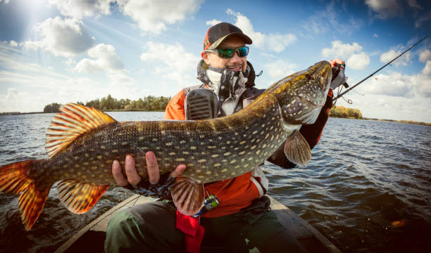 Fishing. Happy angler with pike fishing trophy - foto stock