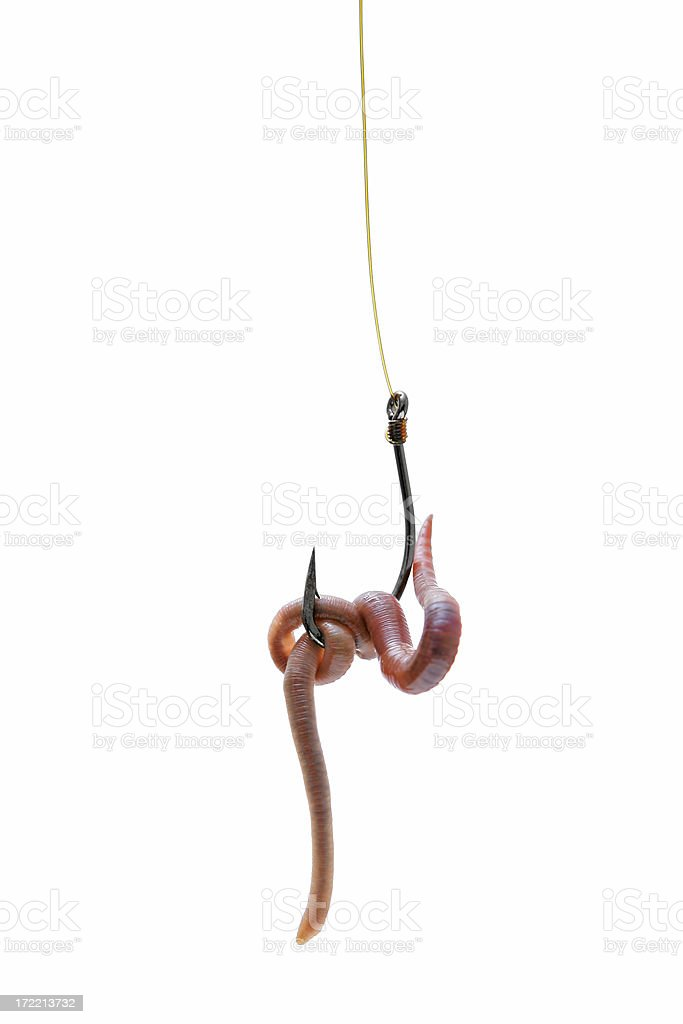 Fishing hook baited with an earthworm stock photo