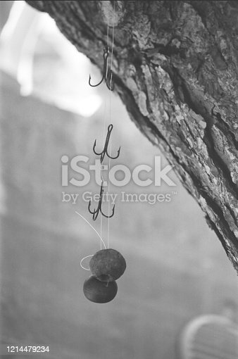 three fishing hooks hanging from a tree with ball float