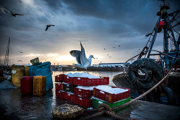 fishing industry: bringing in the catch - fishing boat stock pictures, royalty-free photos & images