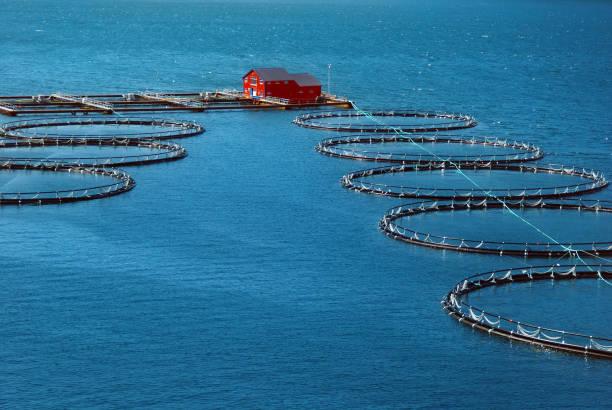 fischerei-industrie in einem fjord in norwegen - lachs meeresfrüchte stock-fotos und bilder