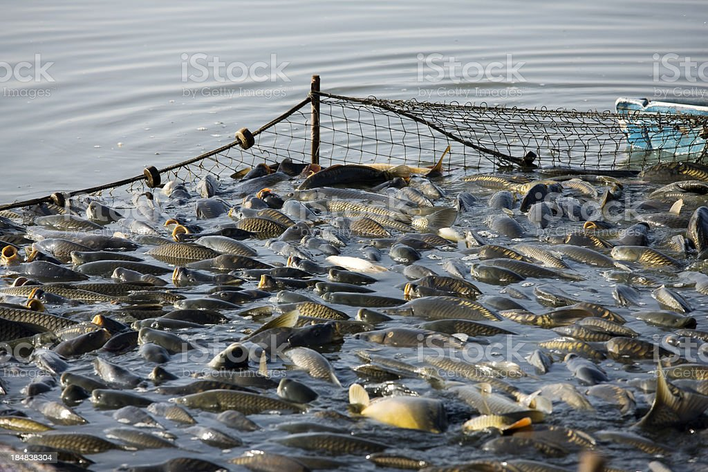 fishing industry stock photo