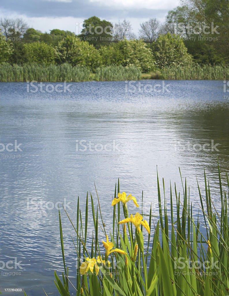 Fishing Lake royalty-free stock photo