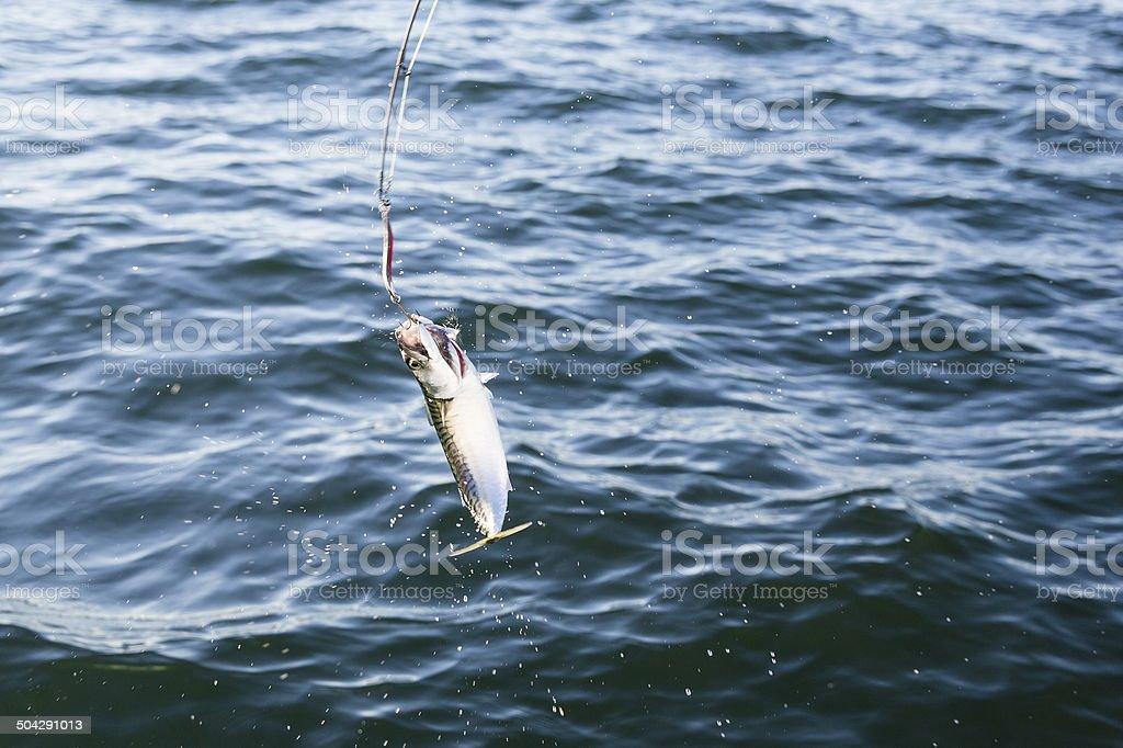Pesca de cavala em o mar - foto de acervo