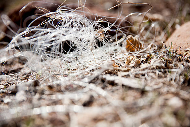 Fishing Mess A low angle view of tangled fishing line. The clear fishing wire sits on the ground. fishing line stock pictures, royalty-free photos & images