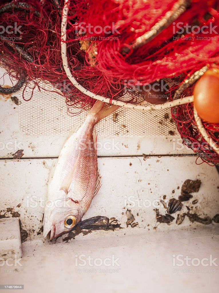 Fishing net and caught fishes stock photo