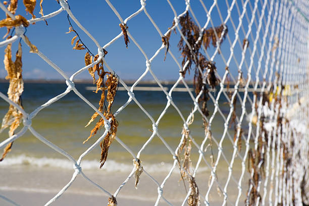 Fishing net on a beach Fishing net on a beach ensnare stock pictures, royalty-free photos & images