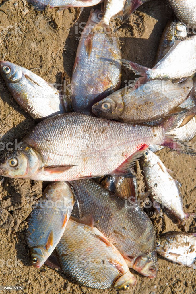 fishing on the river in the summer stock photo