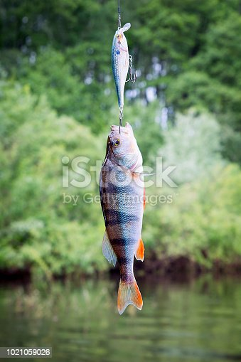 139888169 istock photo Fishing on the river. 1021059026