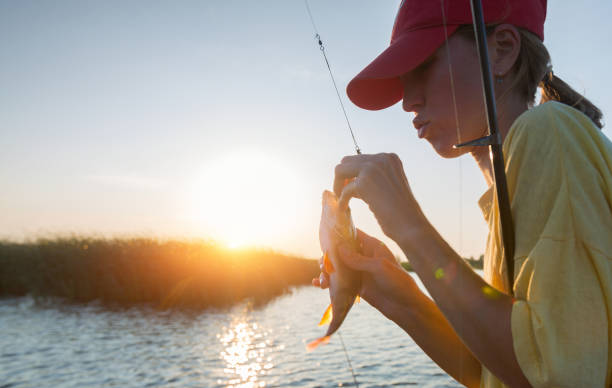 Fishing Young lady fishing perch on the river at sunset perch fish stock pictures, royalty-free photos & images