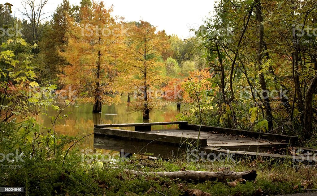 Fishing Pier with Fall Cypress Trees Reflection royalty free stockfoto