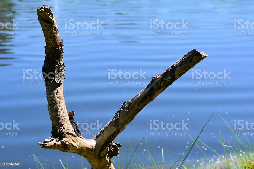 Fishing Rod Support stock photo