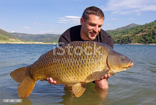1145410808istockphoto Fishing scene, catch of fish, large common carp 1091661092