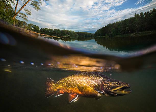 Angeln. Fische unter Wasser – Foto