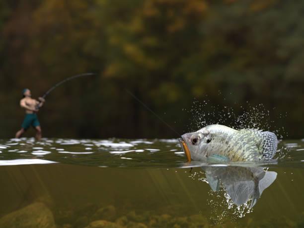 mal angeln, rendern angler mit rute und rolle fangen süßwasser crappie fisch halb wasser anzeigen 3d - crappie angeln stock-fotos und bilder