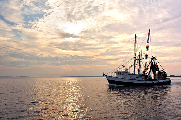 fishing trawler on the water at sunrise - fishing boat stock pictures, royalty-free photos & images