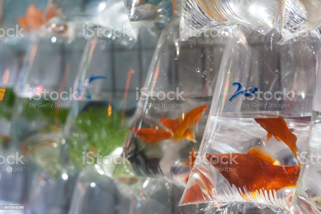 Fishmarket foto