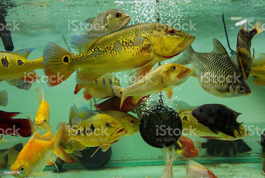 Fishs in an aquarium stock photo