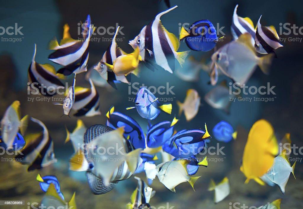 fishs royalty-free stock photo