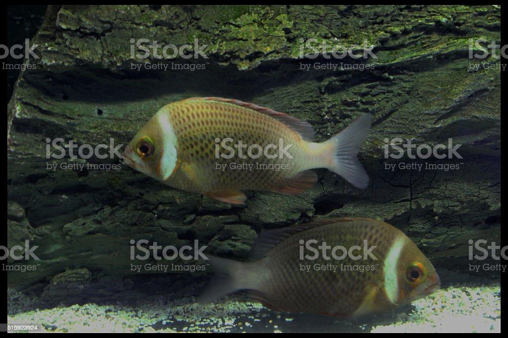 fishs stock photo