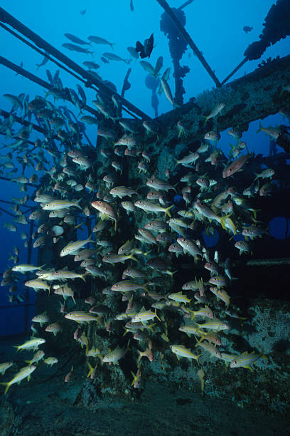 fishy wreck - artificial reef stock pictures, royalty-free photos & images