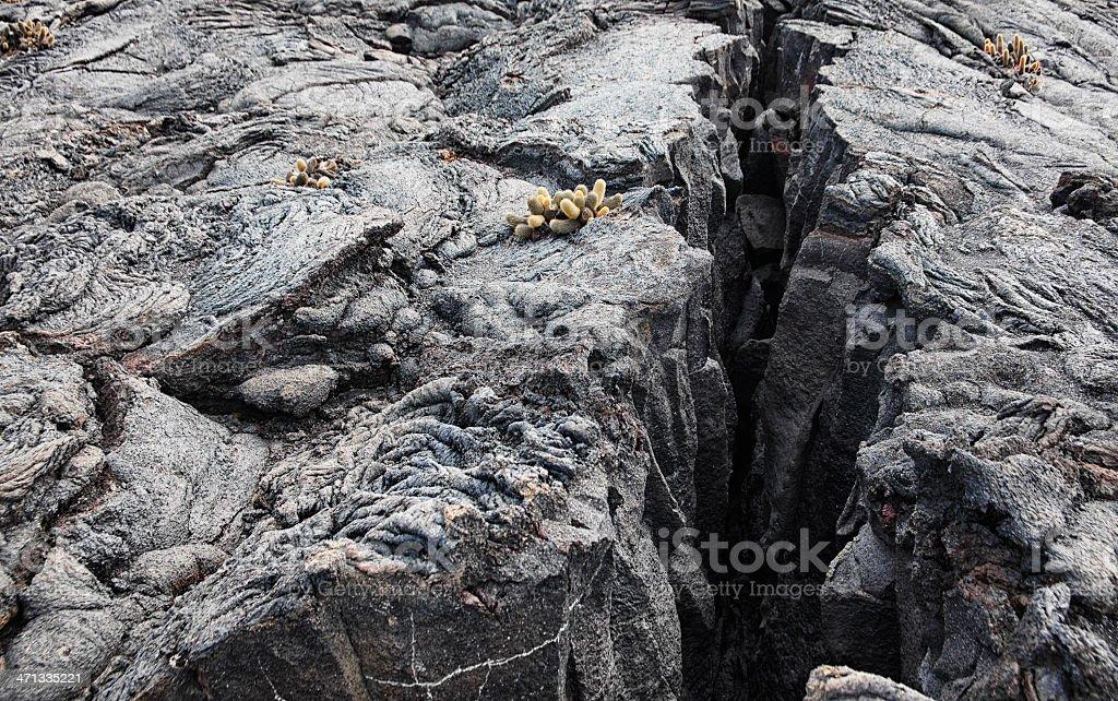 Fissure in Lava Field - Fernandina Island, Galapagos stock photo