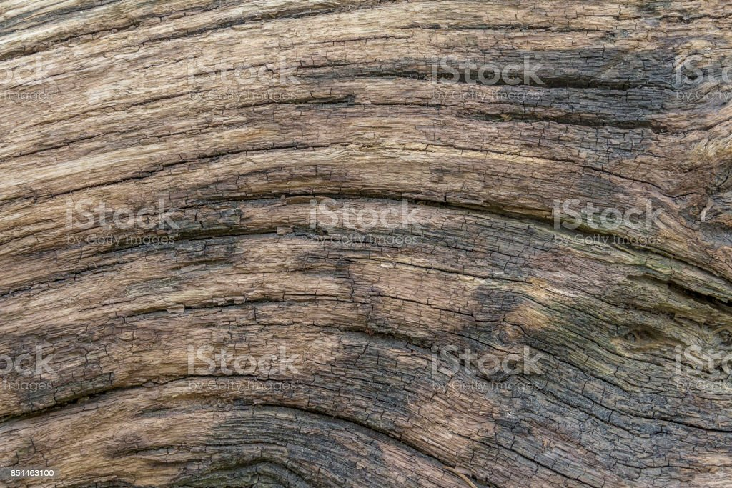 fissured wood surface stock photo