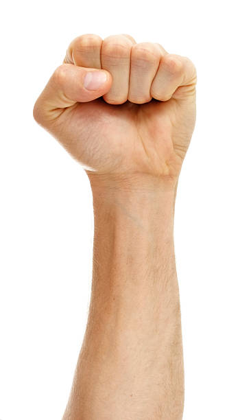 fist on white background - fist stock photos and pictures