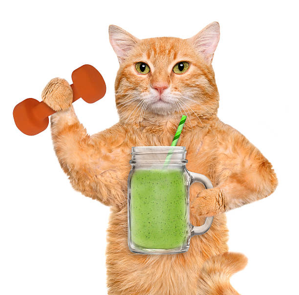 Fitness cat drinking fruit smoothie after a workout . stock photo