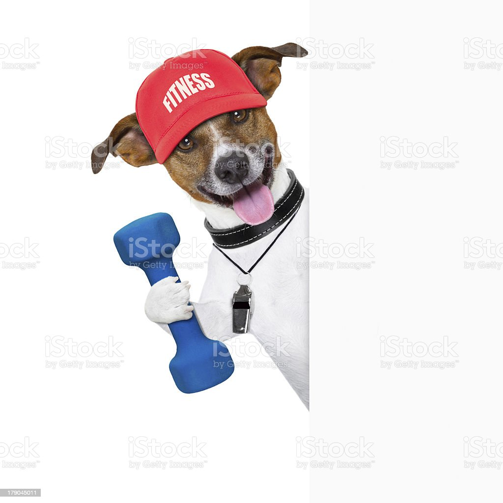 fitness dog  banner royalty-free stock photo