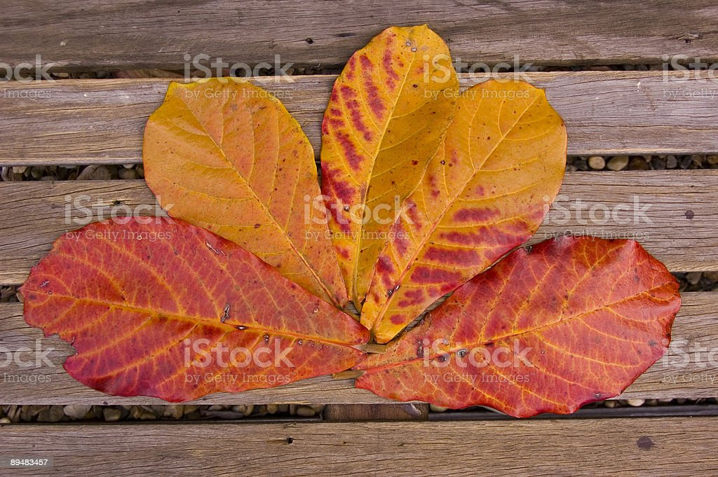 Five autumn leaves on a wooden bench stock photo