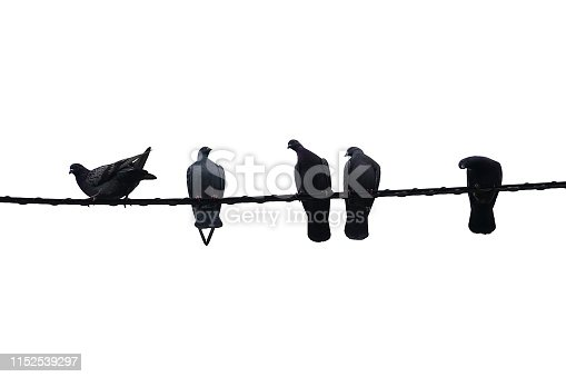 Five birds on a power line, just hangin' out.