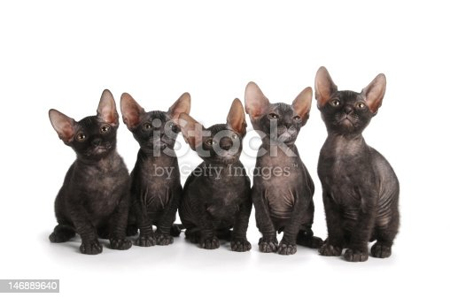 istock Five black sphynx kittens sit isolated on white 146889640