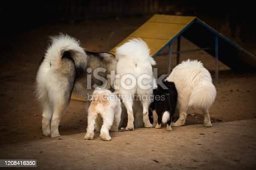 Five breed dogs drinking water in a training area, photographed from behind showing the animal's back.